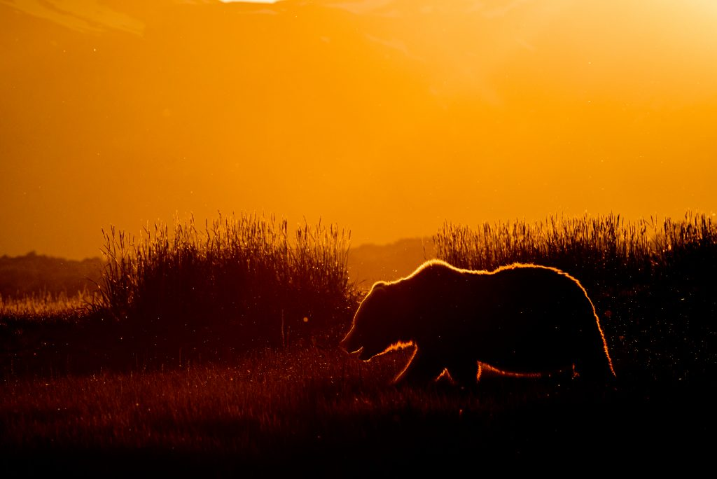 © McDonald Mirabile / WWF-US
