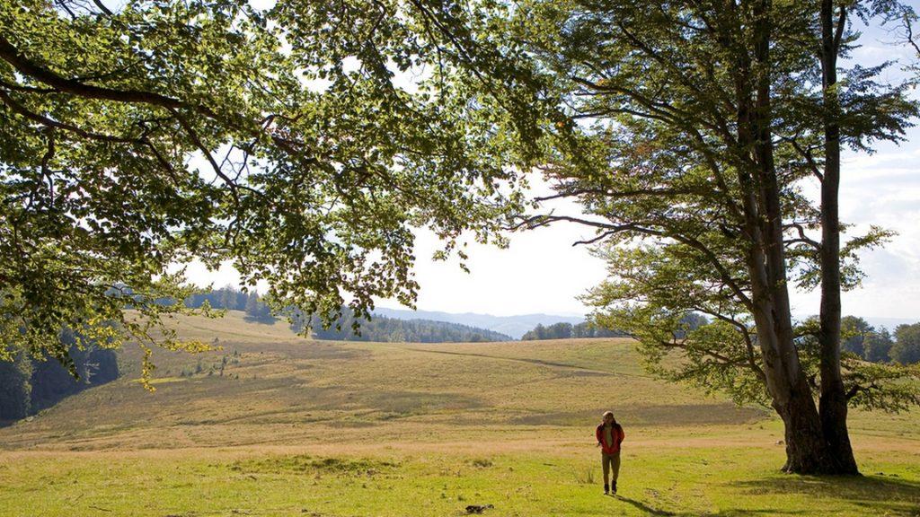 Hiker, Gradistea Muncelului Cioclovina Nature Park, Carpathian M