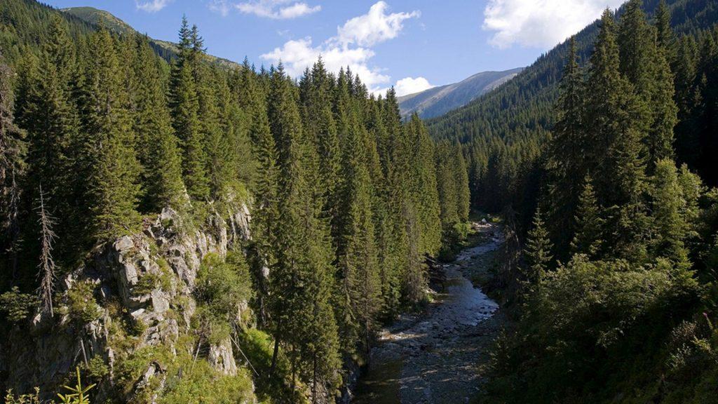 River and fir trees forest, Retezat National Park, Romania