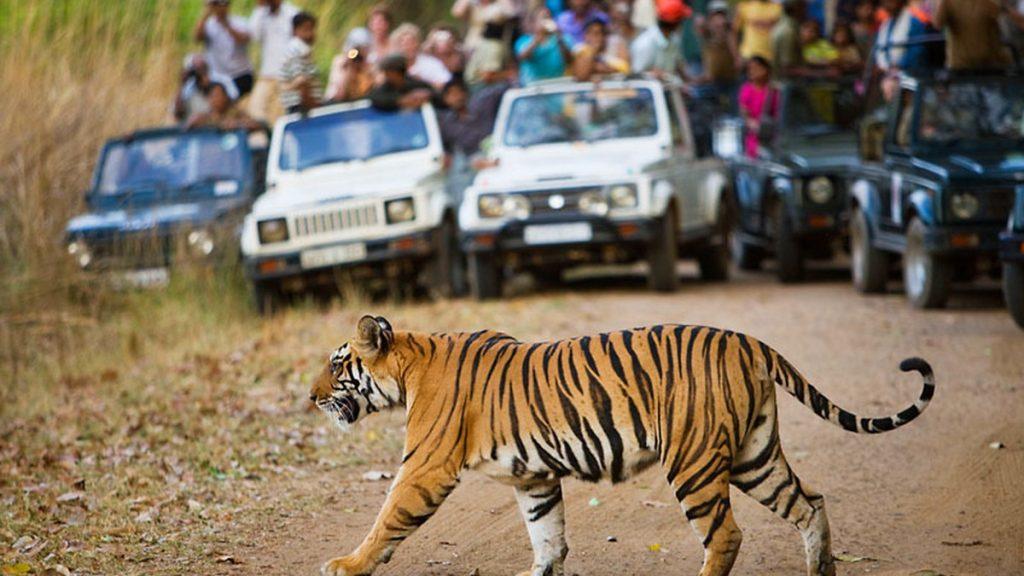 web_257607___tiger_tourism