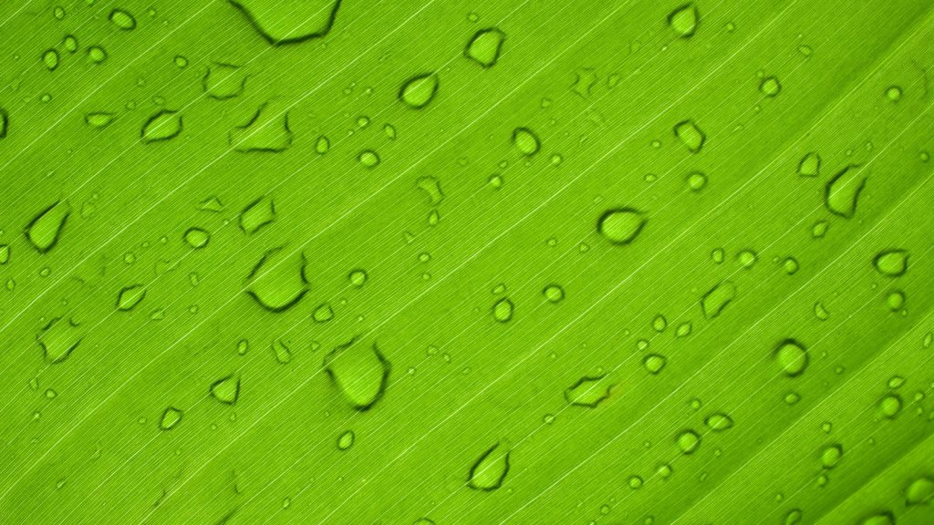 green-leaf-anthony-rampersad-unsplash-1600x900